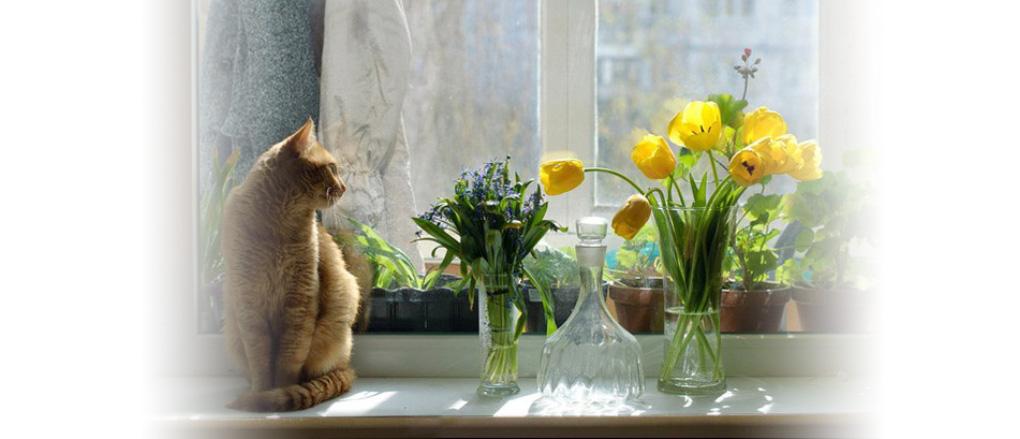 Котя сидящий на подоконнике и смотрящий куда-то вдаль...